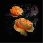 De color amarillo oscuro - rosas anaranjados, en n escultura fotográfica