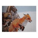 de combate de zorruno de aguileño tarjeta postal