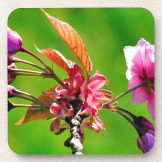 De flores rosas en la primavera