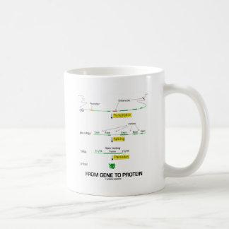 De gen a la proteína tazas de café
