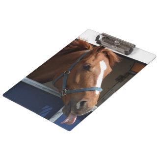 De Horsing caballo fresco de la castaña alrededor