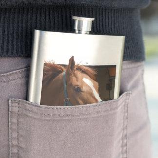 De Horsing caballo fresco de la castaña alrededor Petaca