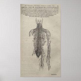 De Humani Corporis Poster