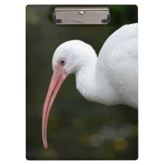 de Ibis del pájaro de la cabeza imagen del ojo azu