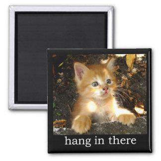 De la caída imán del gatito adentro allí -