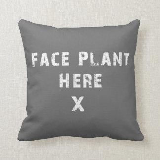 De la cara de la planta almohada gris aquí