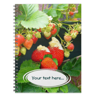 ~ de la cesta de la fresa su cuaderno del texto