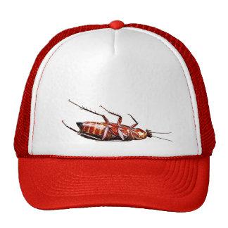 De la cucaracha gorra del camionero solamente -
