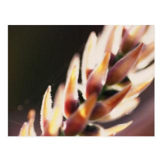 De la flor cierre para arriba tarjetas postales