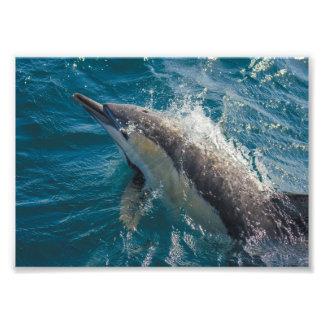 """De la """"impresión común del delfín común belleza"""" - cojinete"""