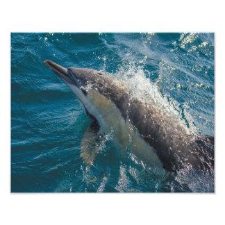 """De la """"impresión común del delfín común belleza"""" - fotografía"""