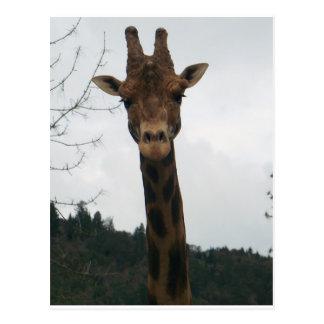 De la jirafa cierre para arriba y personal tarjetas postales