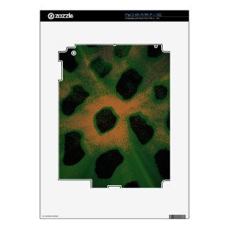 De la luz ámbar negra del estampado de animales calcomanía para el iPad 2