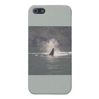 De la orca de la ballena de las respiraciones nieb iPhone 5 coberturas