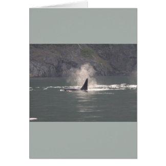 De la orca de la ballena de las respiraciones nieb tarjeta de felicitación
