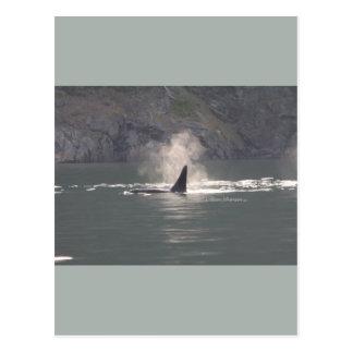 De la orca de la ballena de las respiraciones postal