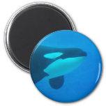 de la orca de la orca azul bajo el agua imán para frigorífico