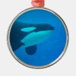 de la orca de la orca azul bajo el agua ornato