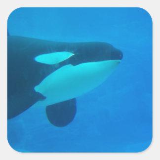 de la orca de la orca azul bajo el agua pegatina cuadrada