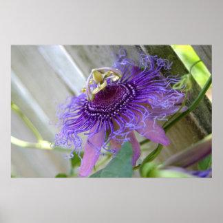 De la pasión púrpura de la flor del flor cierre póster