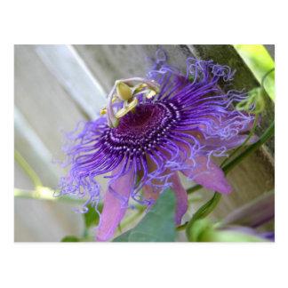 De la pasión púrpura de la flor del flor cierre postal
