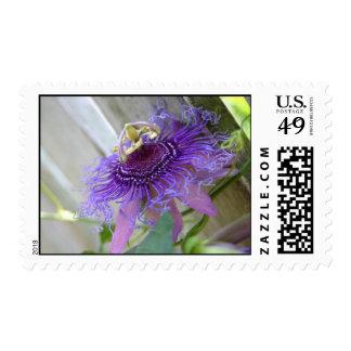 De la pasión púrpura de la flor del flor cierre tr