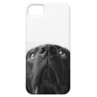 De Labrador de la nariz cierre negro para arriba iPhone 5 Cobertura