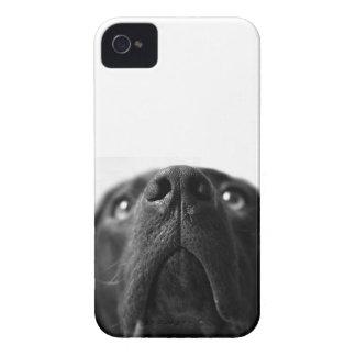 De Labrador de la nariz cierre negro para arriba iPhone 4 Case-Mate Protectores