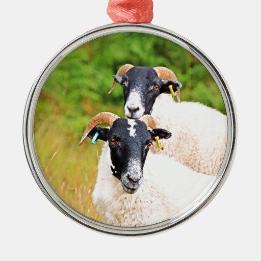 de las ovejas amigos para siempre adorno redondo plateado