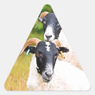 de las ovejas amigos para siempre pegatina triangular
