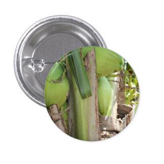 De los cocos Pin verde también