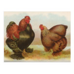 """De los """"postal pollos de Cochin de la perdiz"""" del"""