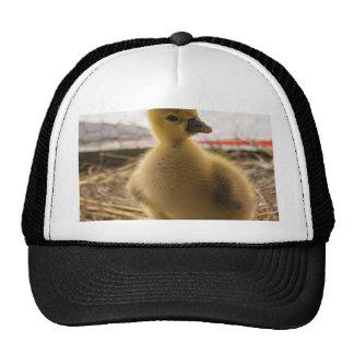 de oro gorras
