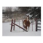 De pasos en la nieve tarjetas postales