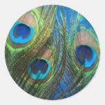 De pescados del ojo todavía del pavo real vida etiquetas redondas