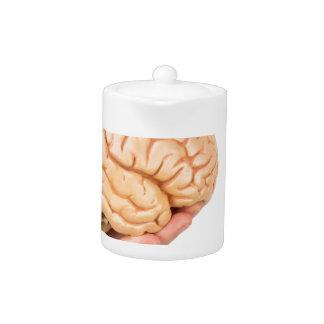 Dé sostener los cerebros humanos modelo aislados