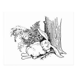 De Tuckered conejito hacia fuera que duerme en bos