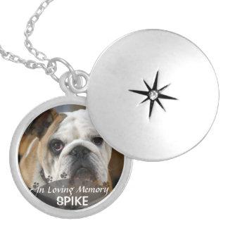 dé vuelta a la imagen del perro en medallón