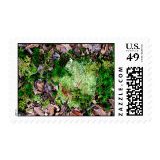 Dead and alive nature postage