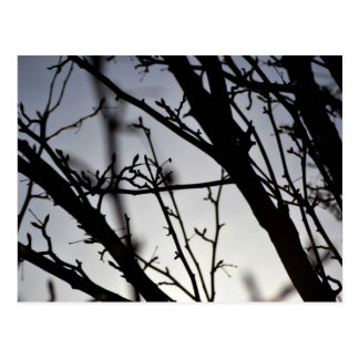 Dead and dark branches without leaves postcard