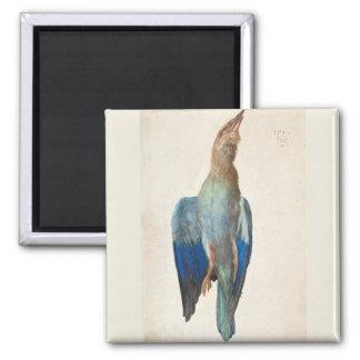 Dead Blue Roller by Albrecht Durer 2 Inch Square Magnet