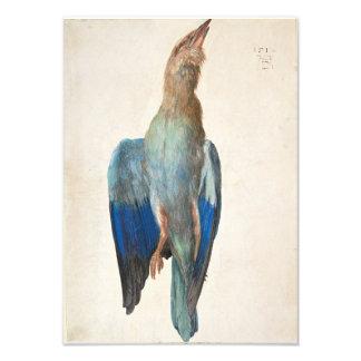Dead Blue Roller by Albrecht Durer Photo Print
