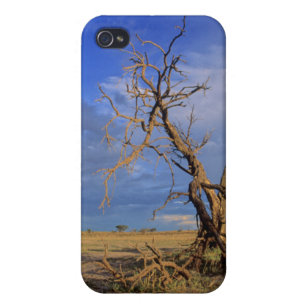 Dead Camel Thorn (Acacia Erioloba) Tree Cover For iPhone 4