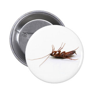 Dead cockroach pin