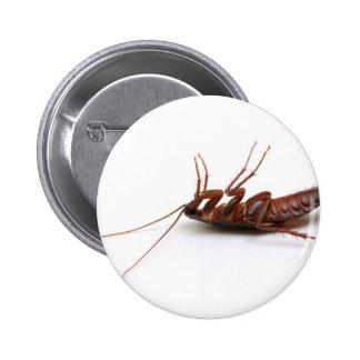 Dead cockroach button