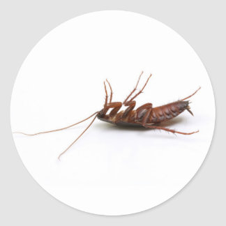 Dead cockroach classic round sticker