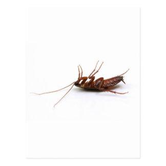 Dead cockroach post cards