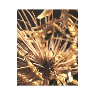 Dead Dandelion Canvas Stretched Canvas Prints