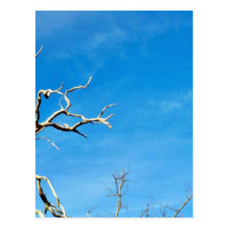 Dead Dry Branch Against Blue Sky Postcard