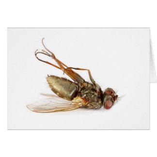 Dead fly cards